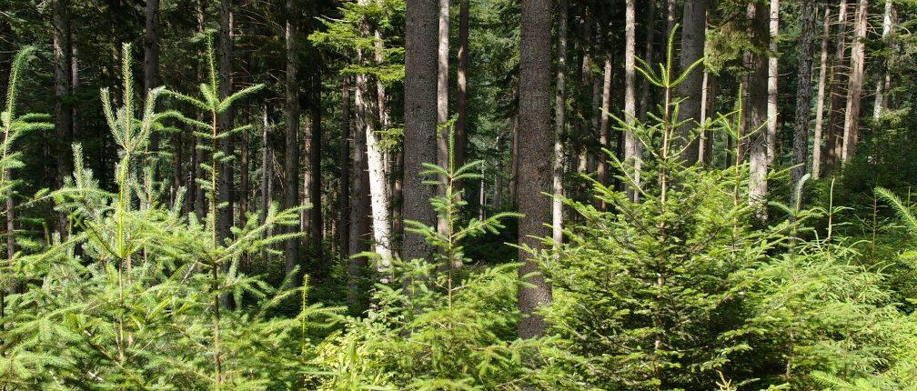 Bois de Mauchet à Auzelles