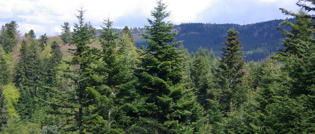 Forêt du Jaladis - Auzelles