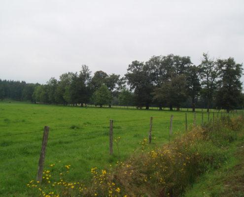 Prairie vers Néronde-sur-Dore