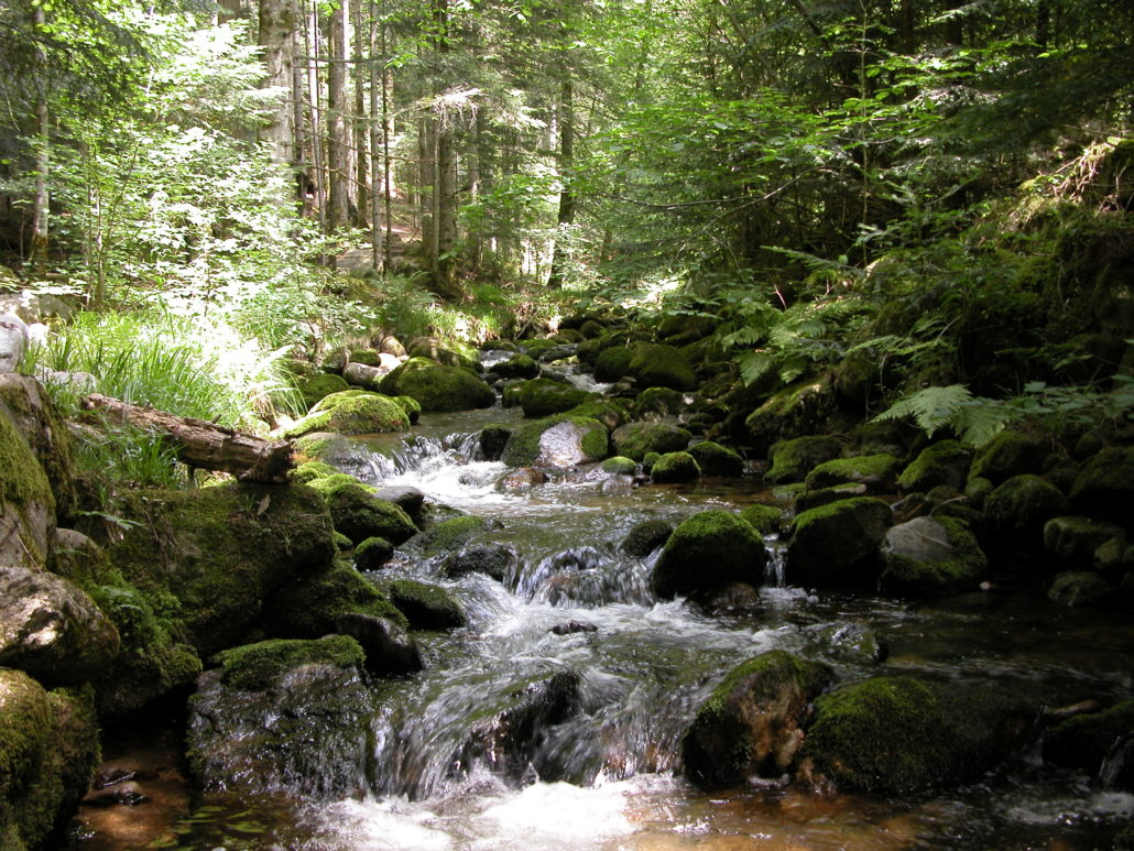 Ruisseau de Vertolaye