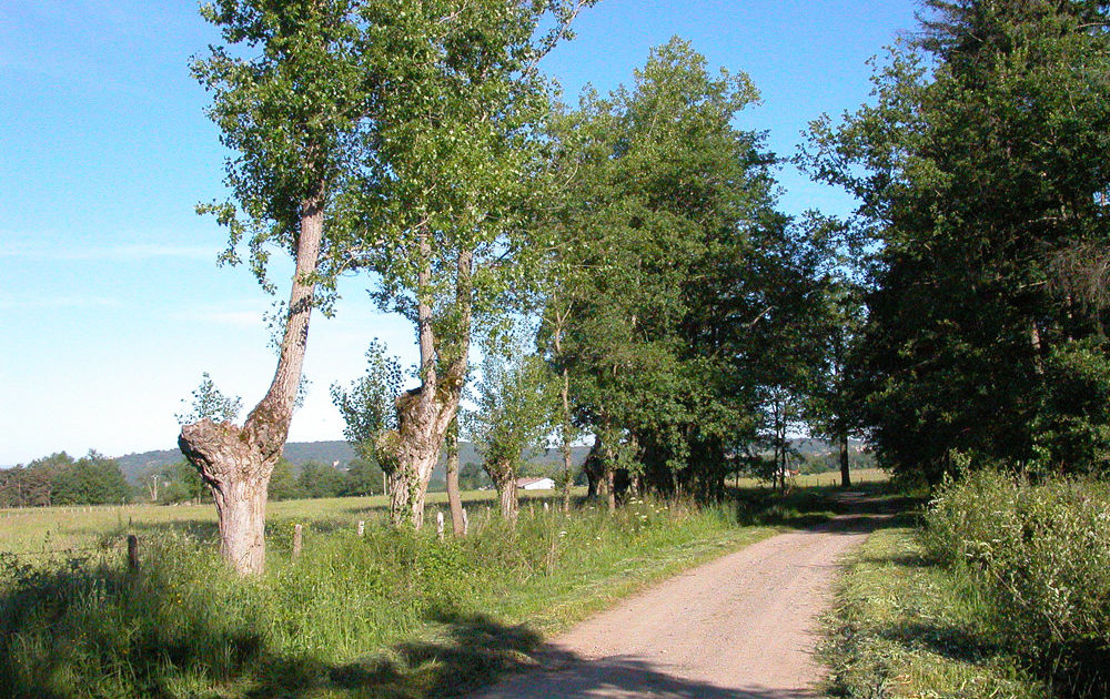 Haies d'arbres taillés en têtard (Bort l'Etang)