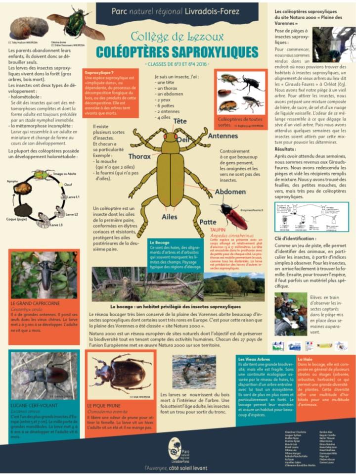 Affiche coléoptères