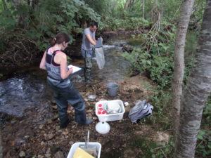 Campagne de prélèvements suivi qualité, Celles-sur-Durolle (2016)