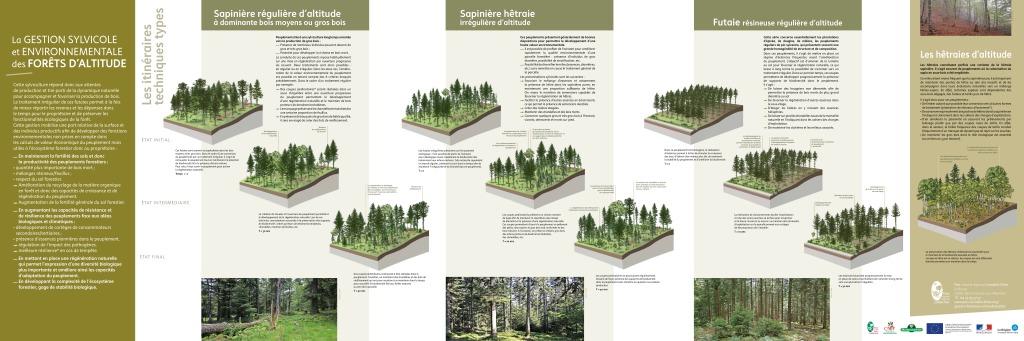 Poster Gestion sylvicole LF (PDF - 1Mb)