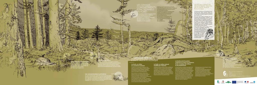 Poster : La sapinière hêtraie à haute valeur écologique