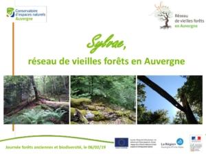 SYLVAE réseau de vieilles forêts en Auvergne