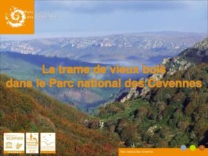 Trame de vieux bois - Parc national des Cévennes